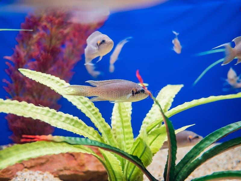 Fischen Sie Schwimmen in den Aquarien des berühmten SeaWorld lizenzfreie stockfotografie