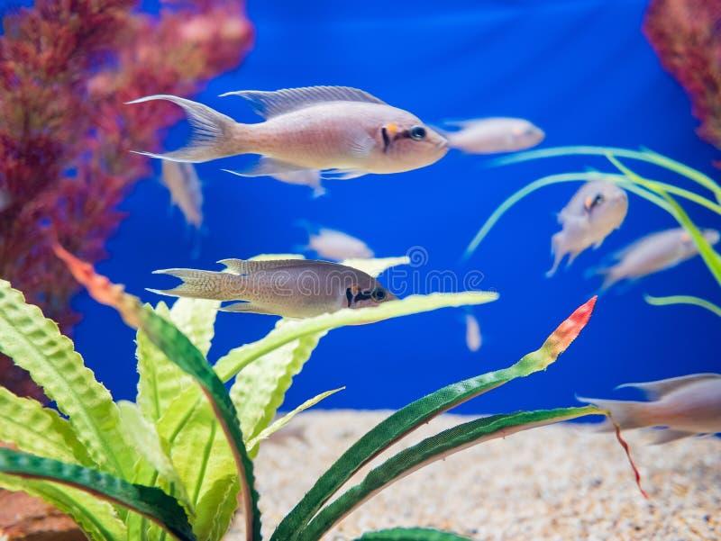 Fischen Sie Schwimmen in den Aquarien des berühmten SeaWorld lizenzfreie stockfotos