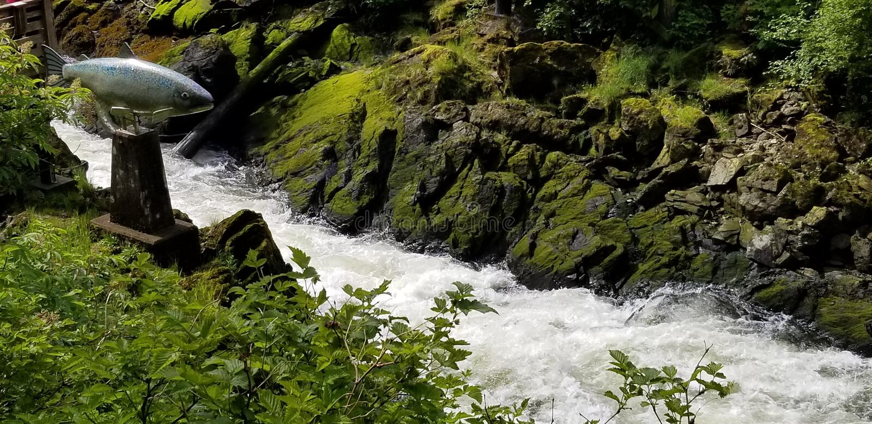 Fischen Sie Statue durch rasenden Fluss in Ketchikan, Alaska lizenzfreie stockfotografie