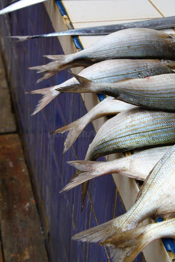 Fischendstücke lizenzfreies stockbild