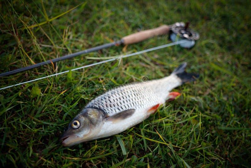 Fischenfliegenfischendöbel liegt auf dem Gras, Gerät für Fliegenfischen, Stange, Spule, flyline Fischenfliegenfischenplakat stockfotografie