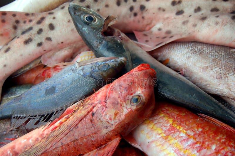 Fischenserie - Fang der Fische lizenzfreie stockbilder