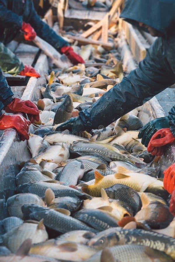 Fischer bei der Arbeit/Fischindustrie stockbilder