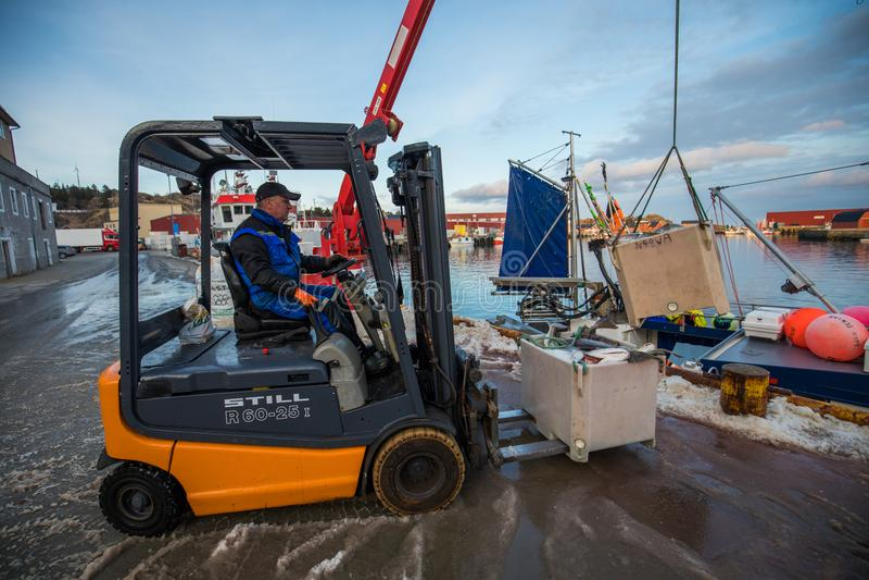 Fischer, die Kabeljau in Norwegen unter Verwendung eines Gabelstaplers entladen stockbild