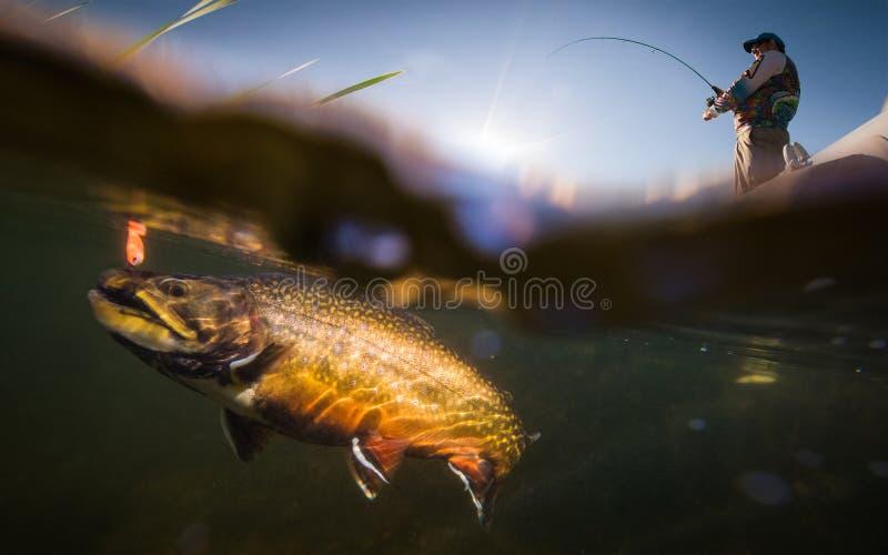 Fischer und Forelle lizenzfreie stockbilder