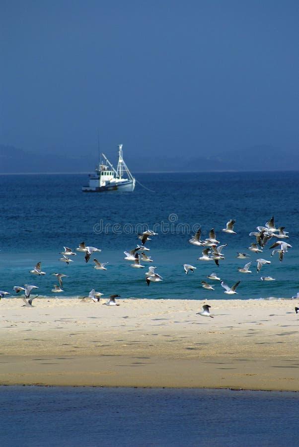 Fischerboot-Schleppnetzfischer lizenzfreie stockfotos