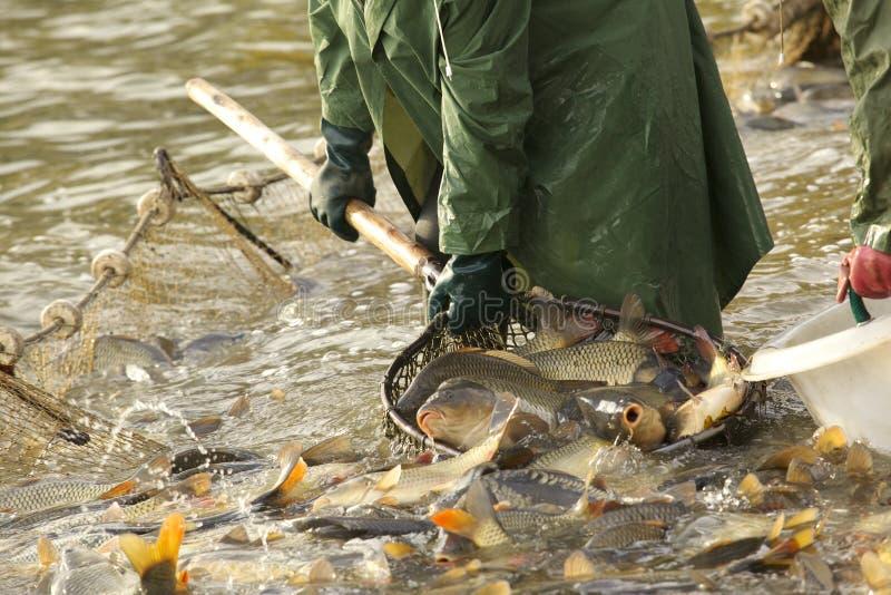 Fischerei auf dem See lizenzfreies stockbild