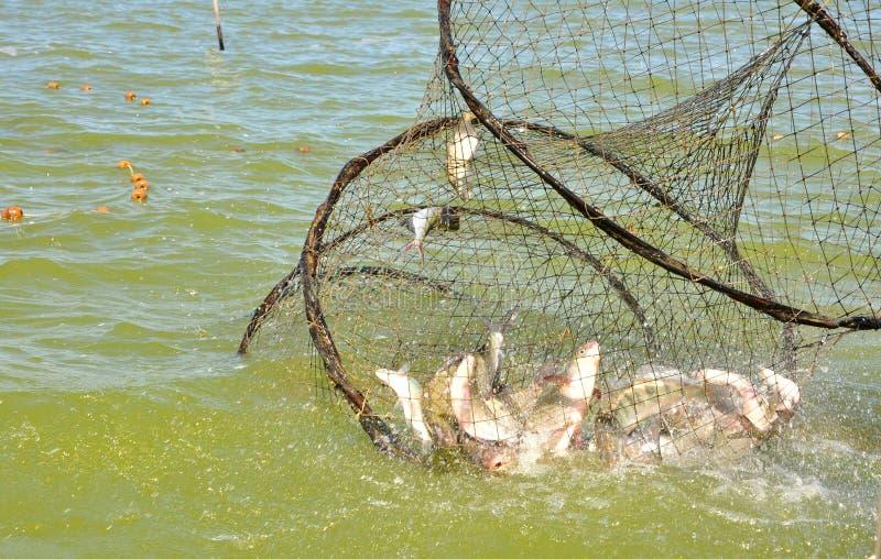 Fischernetz mit Fischen stockbild