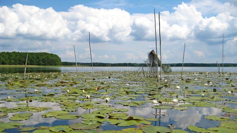 Fischernetz am See Mueritz lizenzfreie stockbilder
