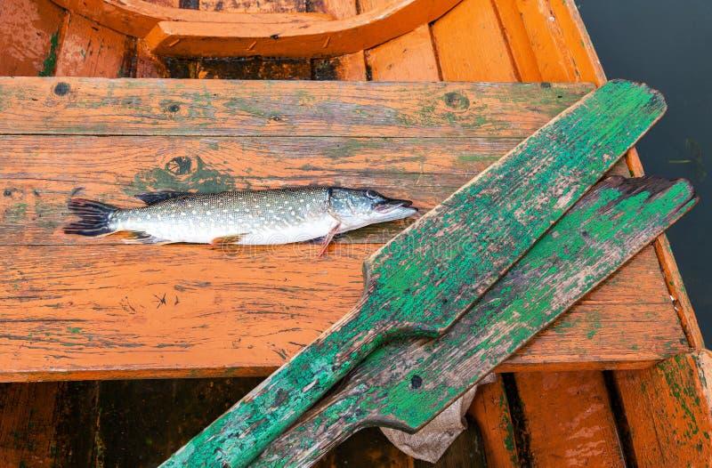 Fischertrophäe - gefangener Spieß liegt im hölzernen Boot stockfotografie