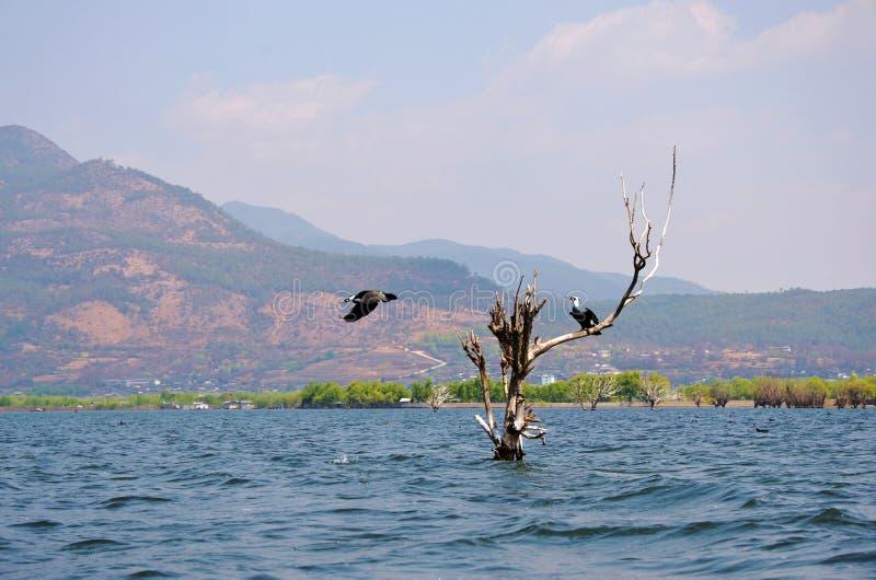 Fischfalke lizenzfreie stockfotografie