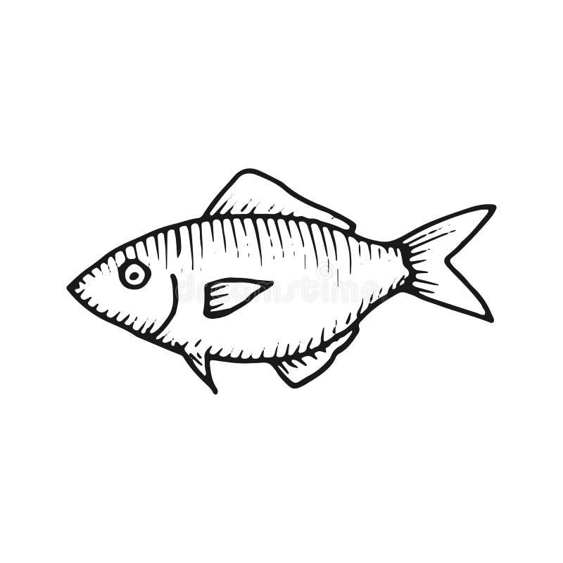 Fischhandzeichnungsvektor Weinlese Isolierelement stock abbildung