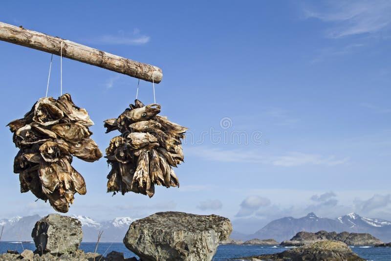 Fischhaupttrockengestelle stockfoto