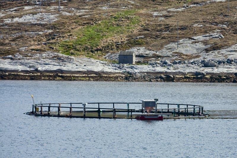 Fischkäfig lizenzfreie stockbilder