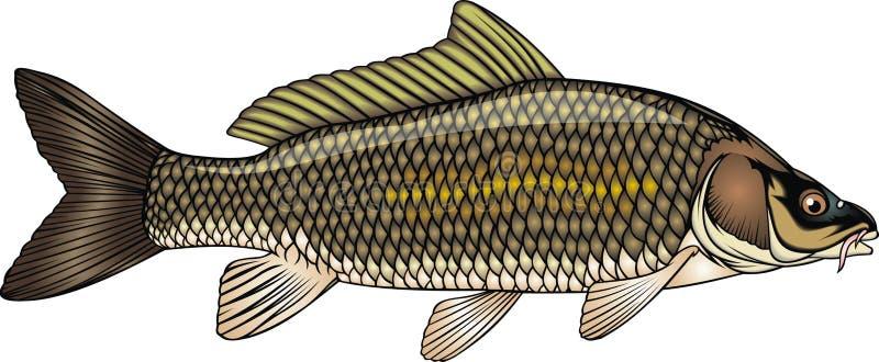 Fischkarpfen stock abbildung