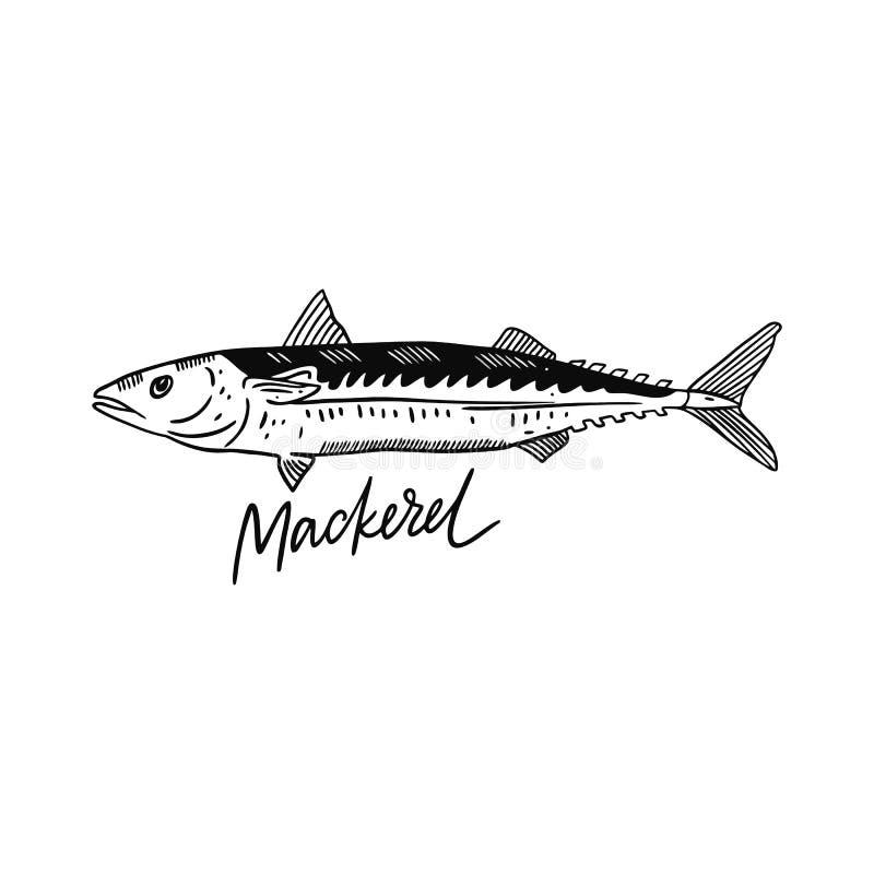 Fischmakrele Hand gezeichnete vektorabbildung Stichart Getrennt auf wei?em Hintergrund vektor abbildung