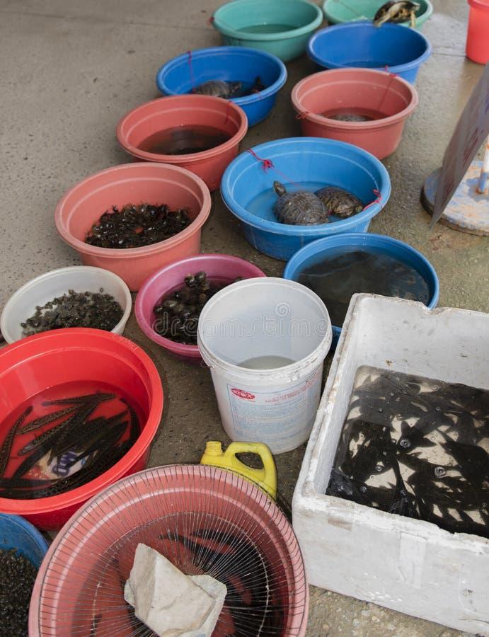 Fischmarkt in im Stadtzentrum gelegenem Hanoi lizenzfreie stockbilder