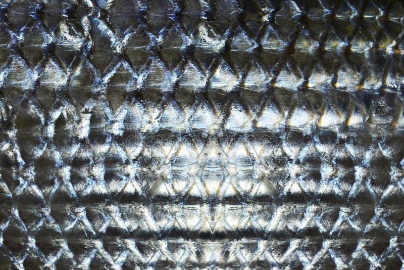 fischschuppen download stockfoto bild von grau meerasche auszug 30651442 stoff muster