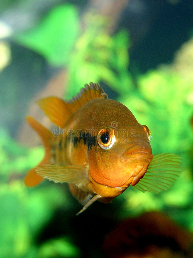 Fischserie IV lizenzfreies stockbild
