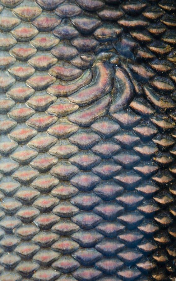 Fischskalabeschaffenheit stockbild