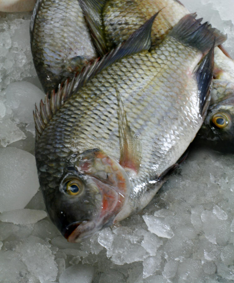 Free Fish Royalty Free Stock Photo - 12762195