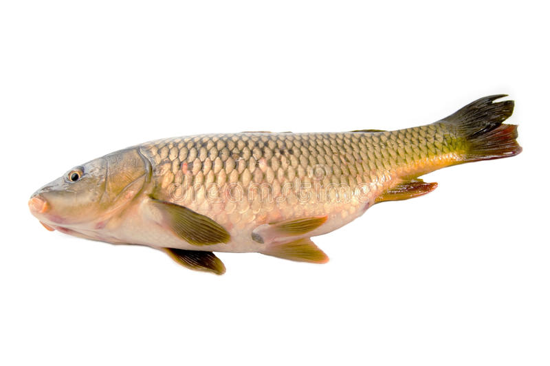 Fish stock photos