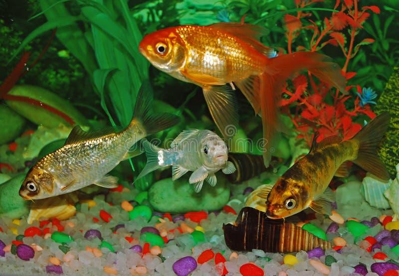 Fish. School of Fish in an aquarium stock photo
