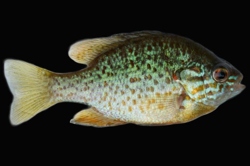 Download Fish Stock Photos - Image: 15180803