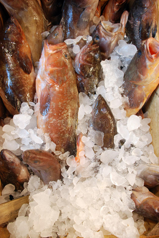 Download Fish stock image. Image of rows, pisces, ocean, market - 17078809