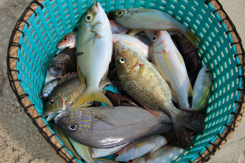 The fish stock image