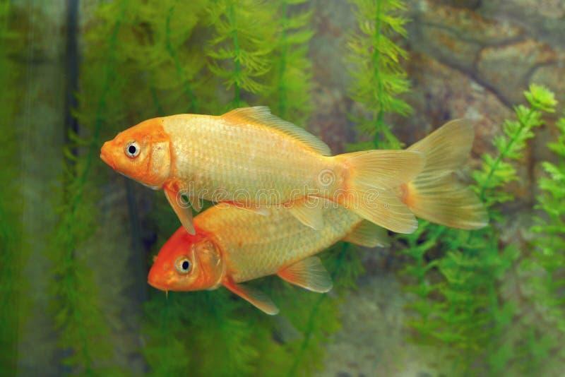 Download Fish Royalty Free Stock Photos - Image: 20954978
