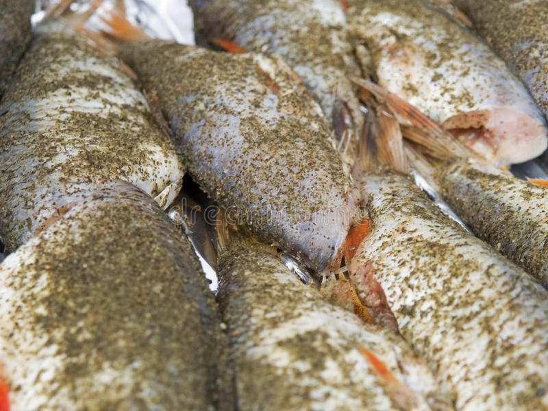 Download Fish stock photo. Image of closeup, food, fins, background - 23198386