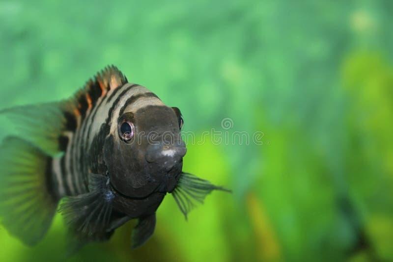 Download Fish stock photo. Image of scale, white, aquarium, rest - 24043378