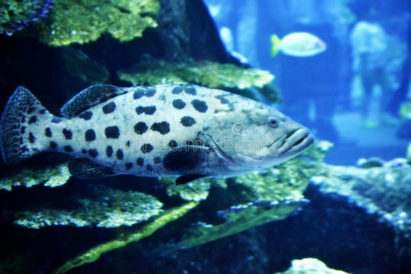 The Fish royalty free stock photo