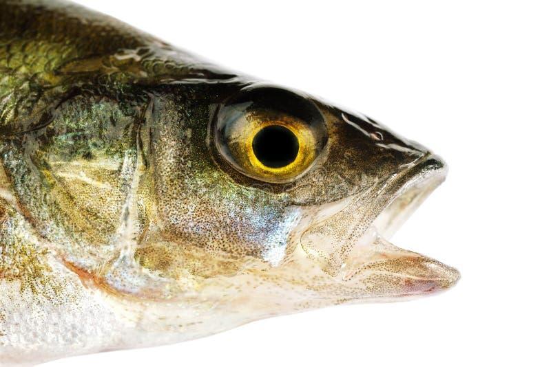 Download Fish Stock Image - Image: 24579291