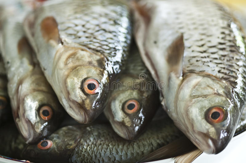 Download Fish stock image. Image of health, meat, eyes, fresh - 24652667