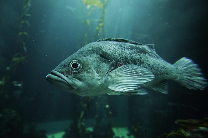 Download Fish stock image. Image of light, marine, nature, water - 25213517