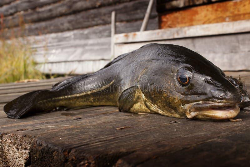 Download Fish Royalty Free Stock Image - Image: 26437316