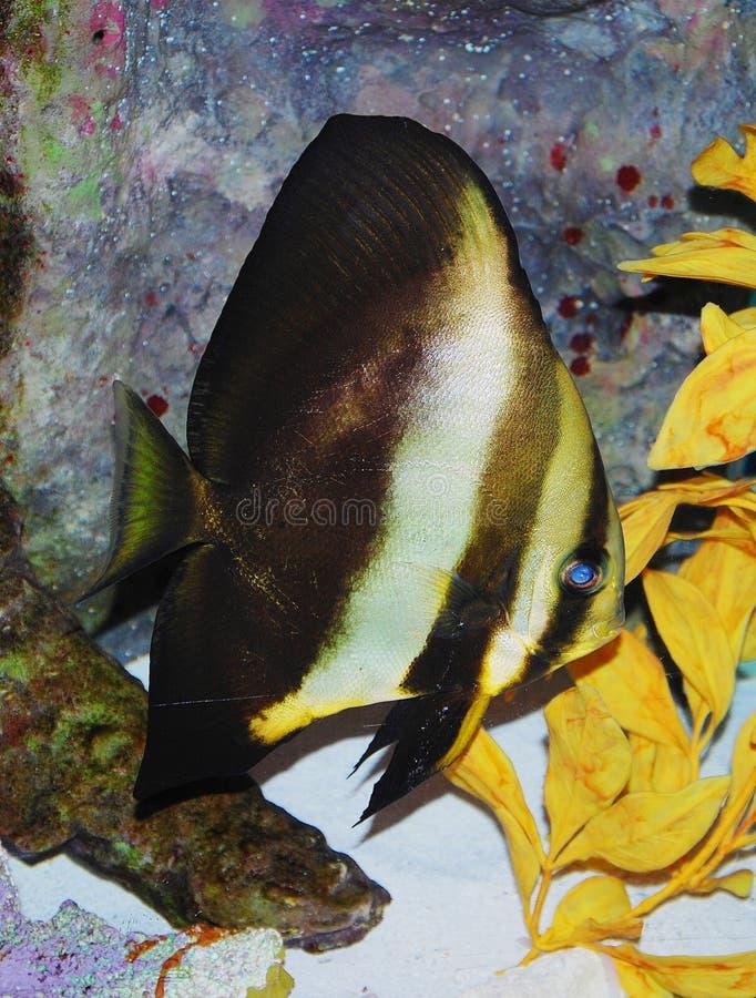 Download Fish stock illustration. Illustration of isolated, animal - 28755735