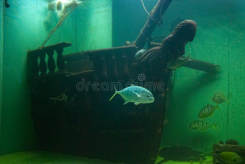 Download Fish stock photo. Image of tropical, exotic, hobby, aquaristic - 28981790