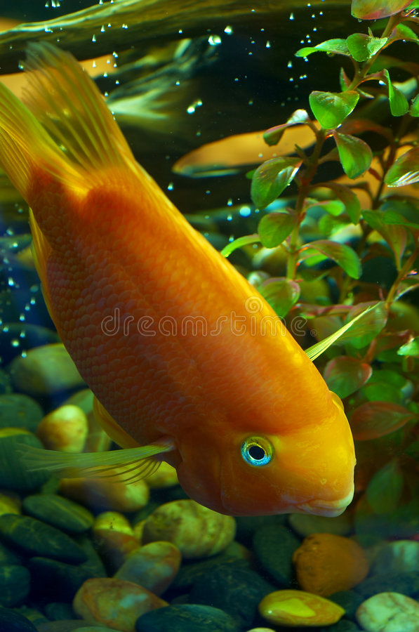Download Fish 4 stock image. Image of sand, herb, tank, green, hunting - 1985645