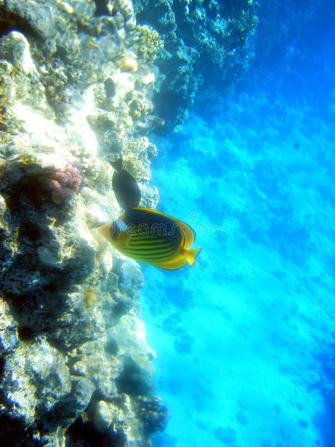 Download Fish 5 stock photo. Image of life, marine, fish, ocean - 4807822