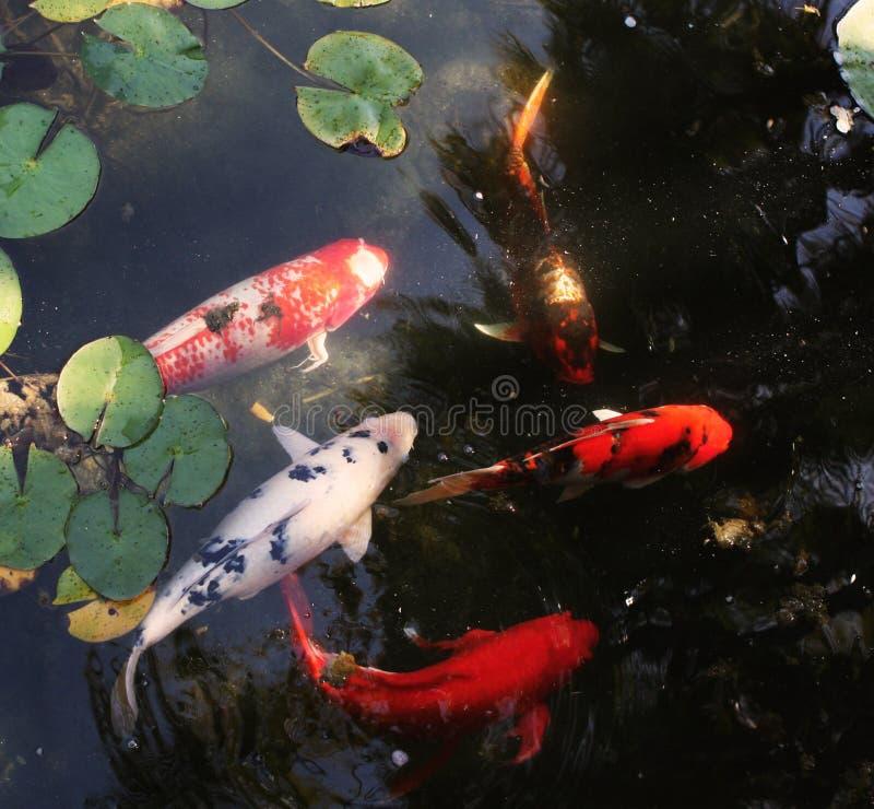 Free Fish Royalty Free Stock Photo - 5286775