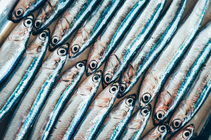 Fish abstract – two rows of fish. Fish abstract with two diagonal rows of fish small fresh fish royalty free stock image