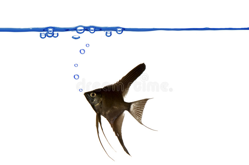 Fish And Air Bubbles. Royalty Free Stock Image