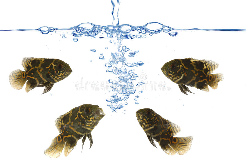 Fish and air bubbles stock images
