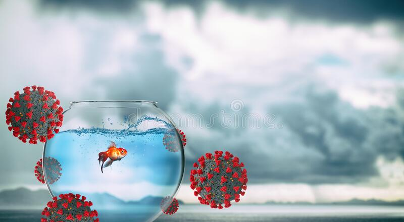 Quarantine concept with an isolated goldfish in its ampoule so as not to get sick royalty free stock image