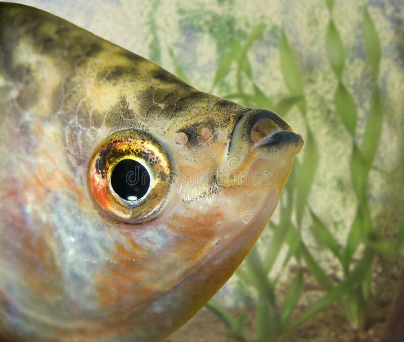 Fish in the aquarium stock photo
