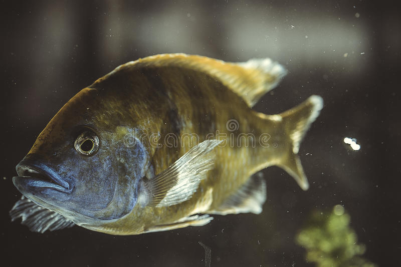 Fish in aquarium stock photos