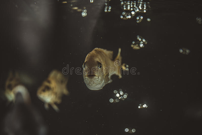 Fish in aquarium stock images